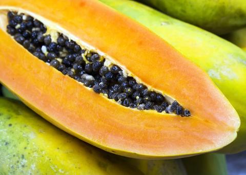papaya seed botanical oil 2