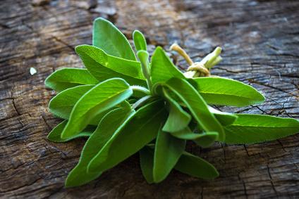Sage Triloba Essential Oil