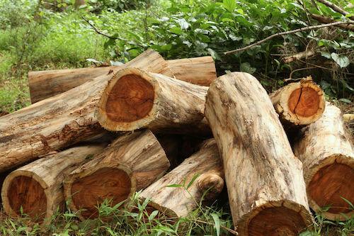rosewood-essential-oil-melange